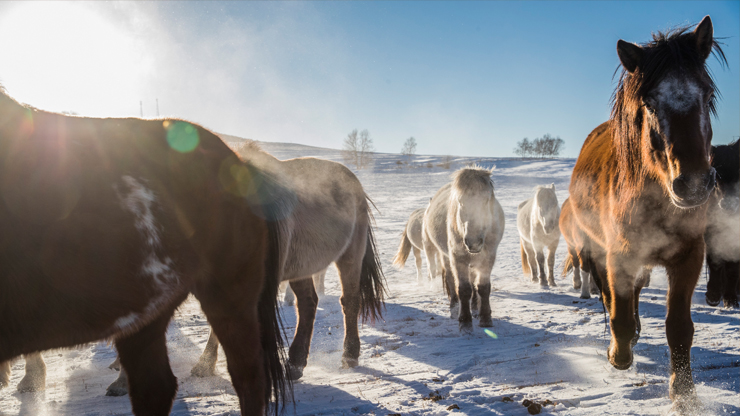 Winter Livestock Care